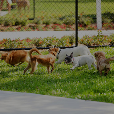 Large Dog Park at Providence Lakes Apartments